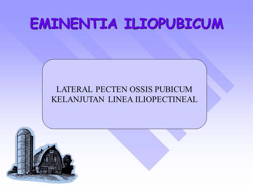 EMINENTIA ILIOPUBICUM LATERAL PECTEN OSSIS PUBICUM KELANJUTAN LINEA ILIOPECTINEAL