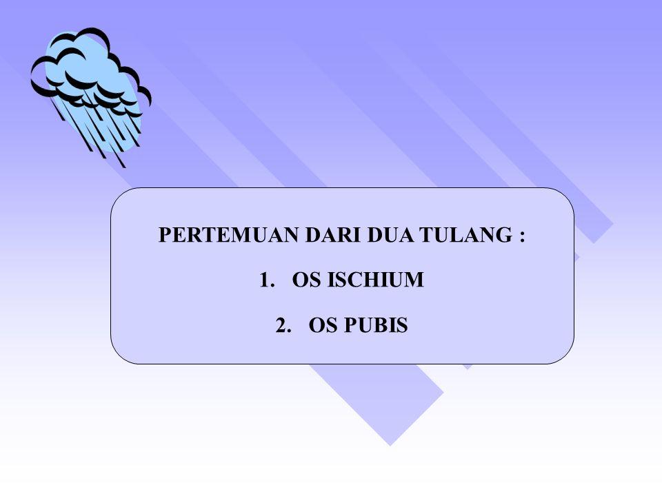 PERTEMUAN DARI DUA TULANG : 1.OS ISCHIUM 2.OS PUBIS