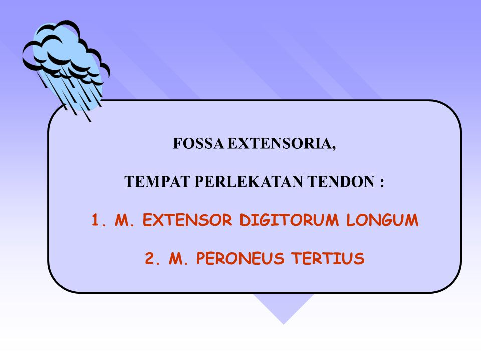 FOSSA EXTENSORIA, TEMPAT PERLEKATAN TENDON : 1.M. EXTENSOR DIGITORUM LONGUM 2.M. PERONEUS TERTIUS