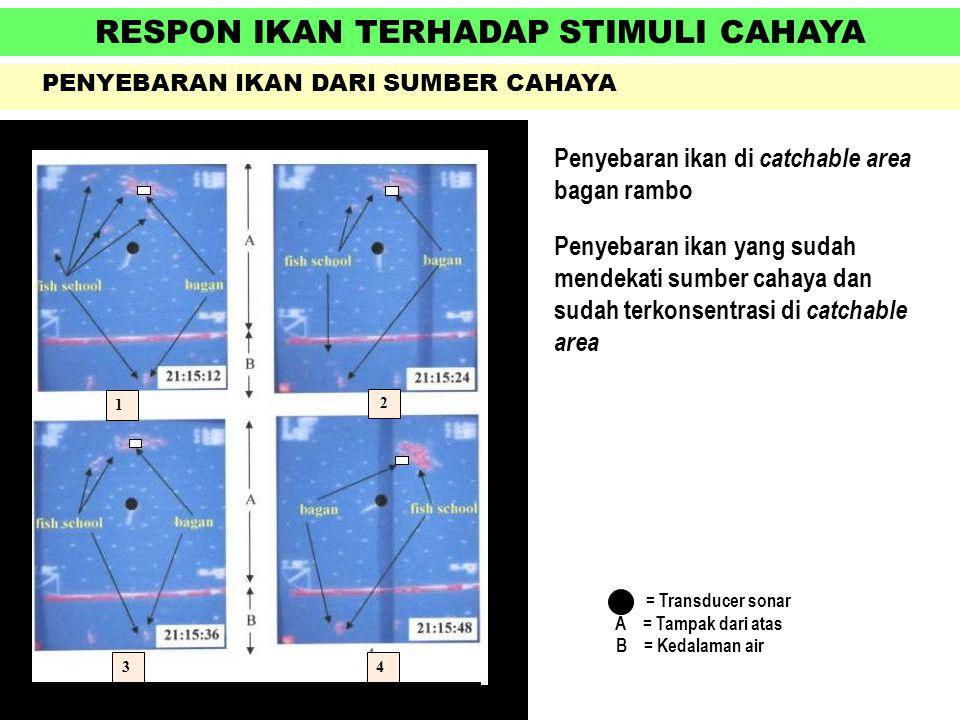 RESPON IKAN TERHADAP STIMULI CAHAYA PENYEBARAN IKAN DARI SUMBER CAHAYA Penyebaran ikan di catchable area bagan rambo Penyebaran ikan yang sudah mendek