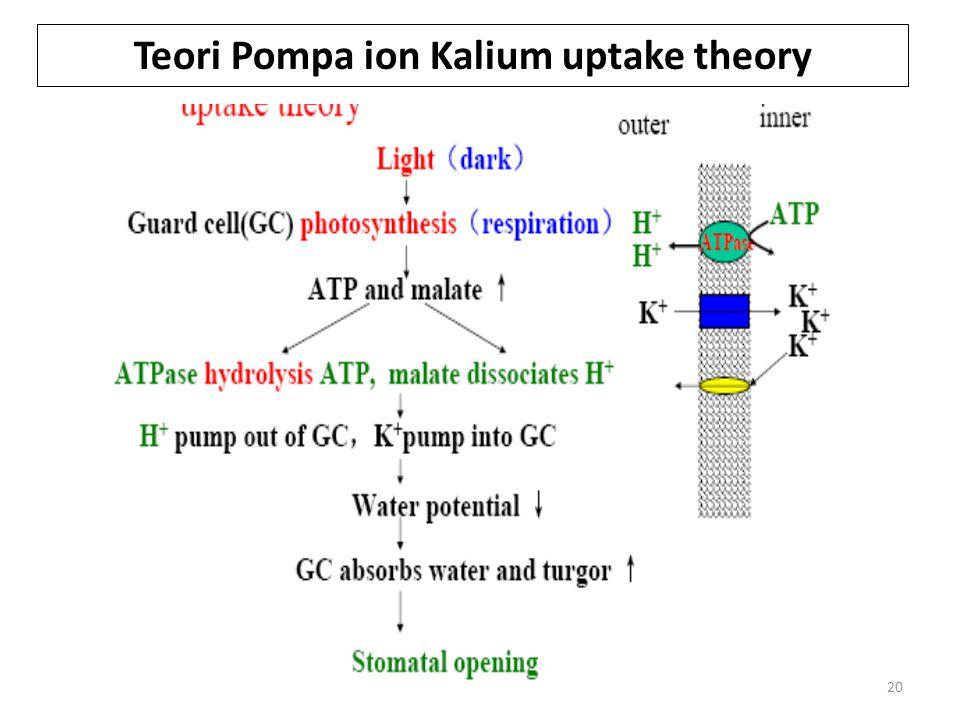 20 Teori Pompa ion Kalium uptake theory