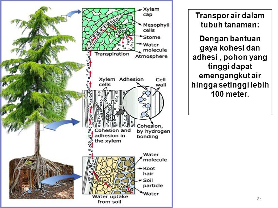27 Transpor air dalam tubuh tanaman: Dengan bantuan gaya kohesi dan adhesi, pohon yang tinggi dapat emengangkut air hingga setinggi lebih 100 meter.