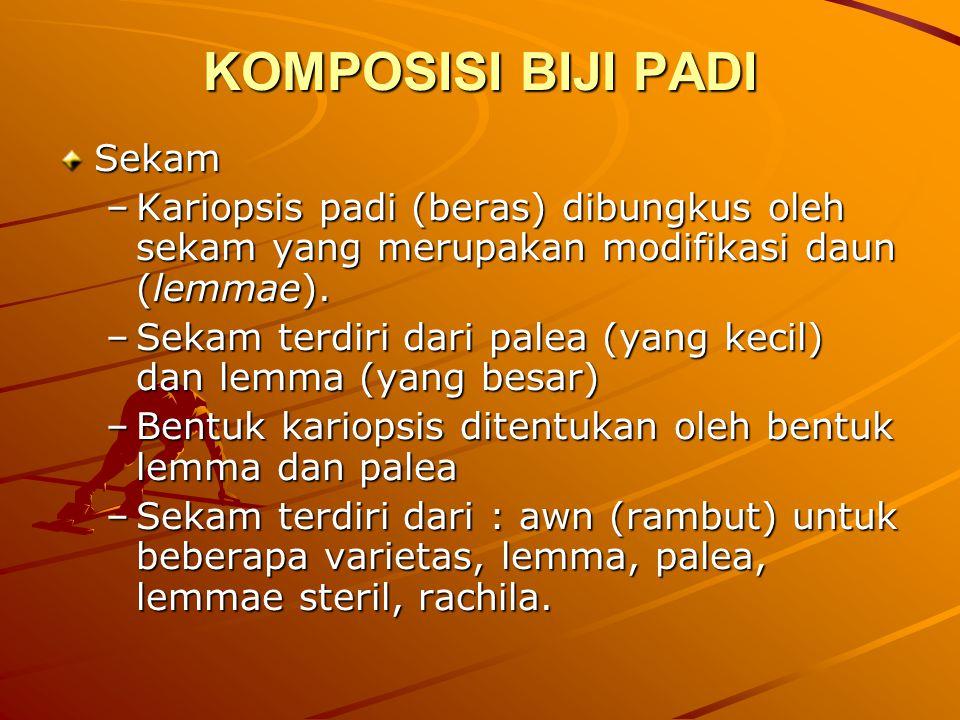KOMPOSISI BIJI PADI Sekam –Kariopsis padi (beras) dibungkus oleh sekam yang merupakan modifikasi daun (lemmae). –Sekam terdiri dari palea (yang kecil)