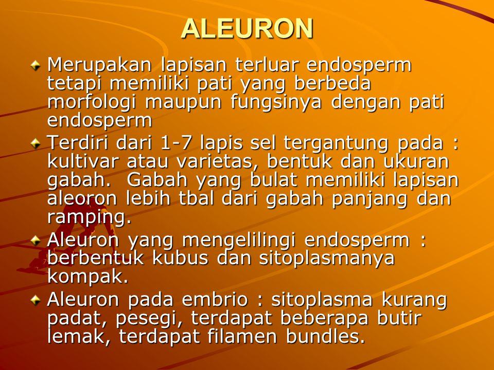 ALEURON Merupakan lapisan terluar endosperm tetapi memiliki pati yang berbeda morfologi maupun fungsinya dengan pati endosperm Terdiri dari 1-7 lapis sel tergantung pada : kultivar atau varietas, bentuk dan ukuran gabah.
