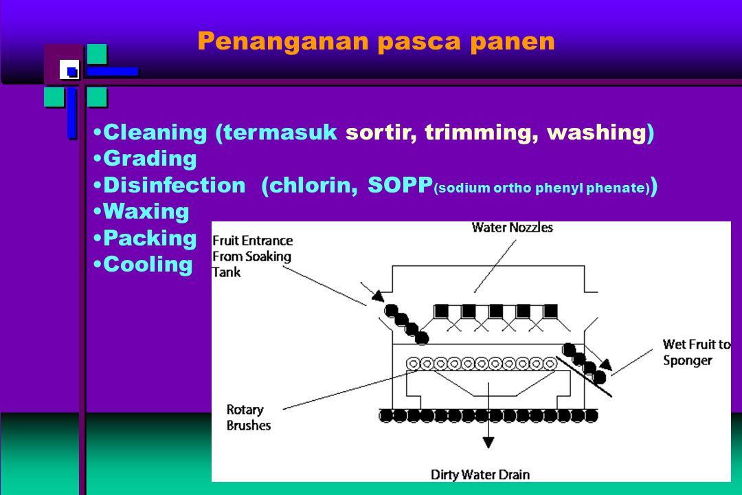 Penanganan pasca panen Cleaning (termasuk sortir, trimming, washing) Grading Disinfection (chlorin, SOPP (sodium ortho phenyl phenate) ) Waxing Packin