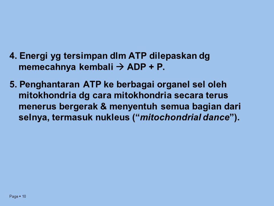Page  10 4. Energi yg tersimpan dlm ATP dilepaskan dg memecahnya kembali  ADP + P. 5. Penghantaran ATP ke berbagai organel sel oleh mitokhondria dg