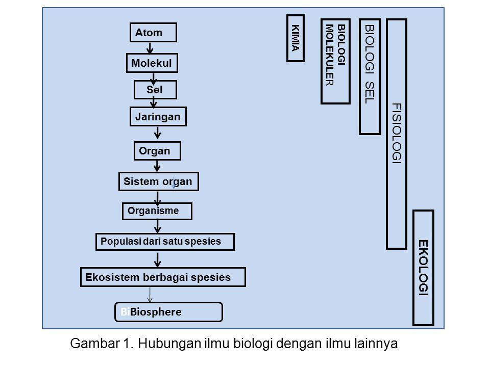 Gambar 1. Hubungan ilmu biologi dengan ilmu lainnya BiBiosphere Ekosistem berbagai spesies Populasi dari satu spesies Organisme Sistem organ Organ Jar