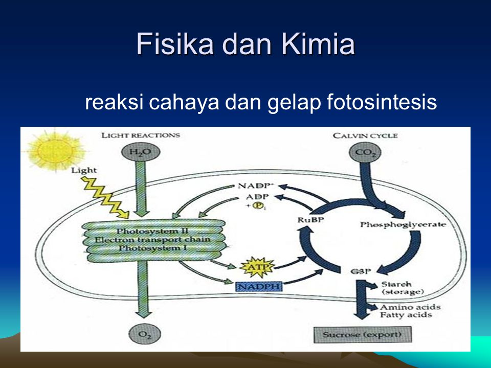 Fisika dan Kimia reaksi cahaya dan gelap fotosintesis