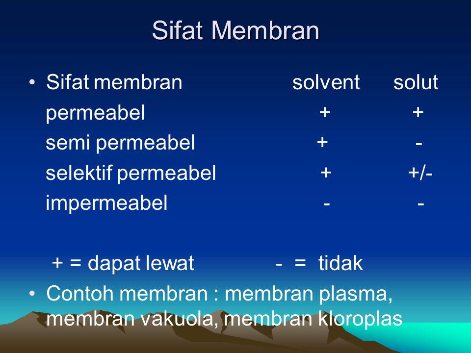 Sifat Membran Sifat membran solvent solut permeabel + + semi permeabel + - selektif permeabel + +/- impermeabel - - + = dapat lewat - = tidak Contoh m