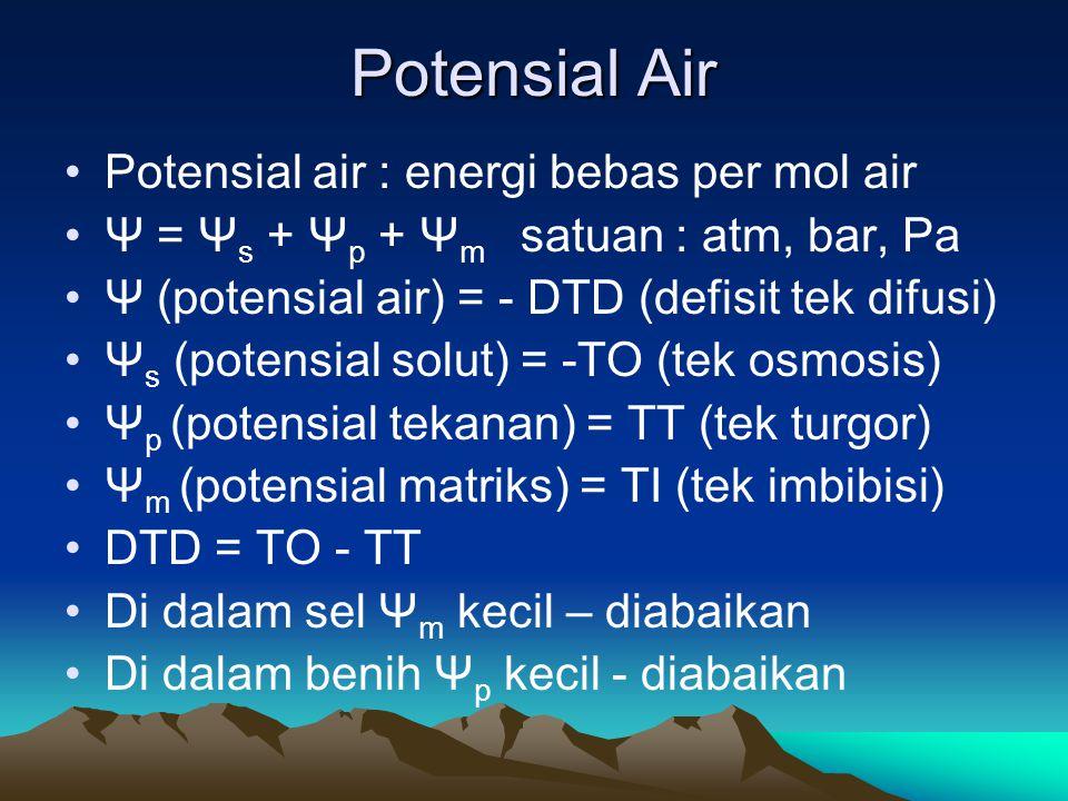 Potensial Air Potensial air : energi bebas per mol air Ψ = Ψ s + Ψ p + Ψ m satuan : atm, bar, Pa Ψ (potensial air) = - DTD (defisit tek difusi) Ψ s (p