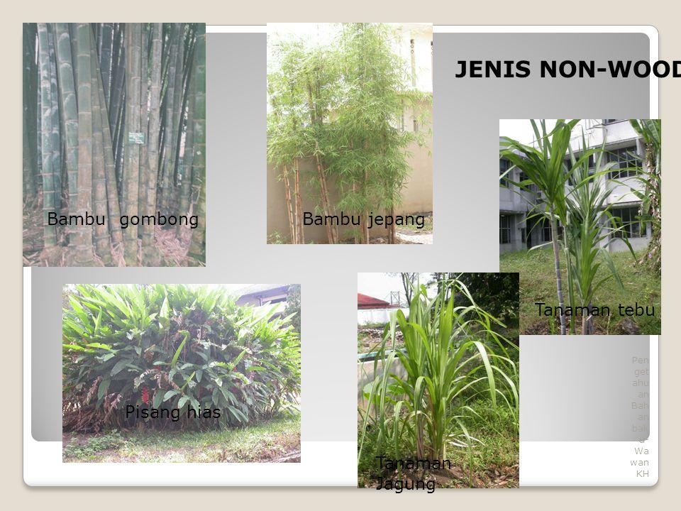 8 Pen get ahu an Bah an bak u- Wa wan KH Tanaman Jagung Bambu gombong Pisang hias Bambu jepang Tanaman tebu JENIS NON-WOOD