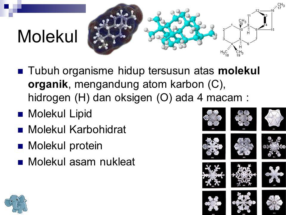 Molekul Tubuh organisme hidup tersusun atas molekul organik, mengandung atom karbon (C), hidrogen (H) dan oksigen (O) ada 4 macam : Molekul Lipid Mole