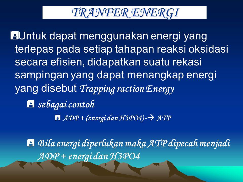 TRANPOR ELEKTRON  Sumber energi bakteri aerob mutlak diperlukan dari oksidasi substrat secara lengkap dan sebagai akseptor elektron terakhir adalah m