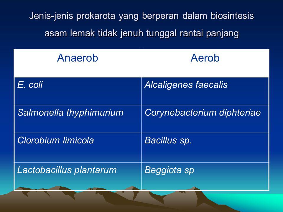 METABOLISME LEMAK Sebagian besar prokariota dapat tumbuh pada media yang mengandung lemak Lemak terlebih dahulu diesterifikasi menjadi asam lemak. Asa