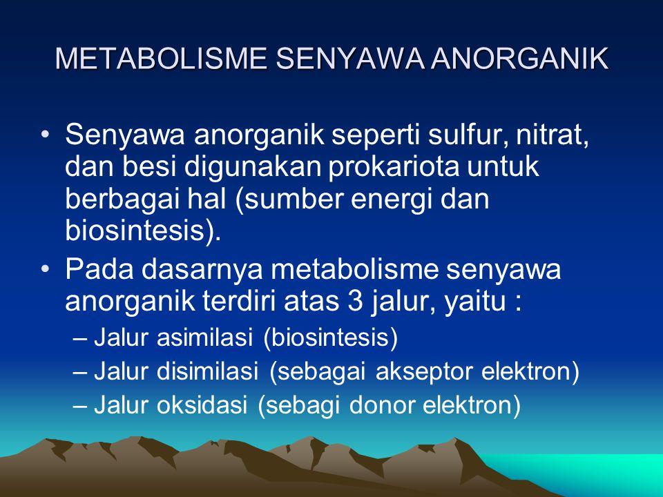 KATABOLISME ASAM AMINO Asam amino dapat dipakai menjadi sumber energi.
