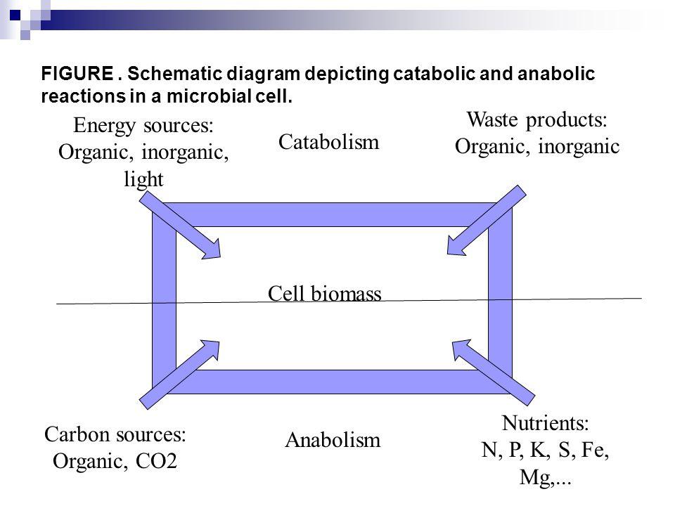 METABOLISME SENYAWA ANORGANIK Senyawa anorganik seperti sulfur, nitrat, dan besi digunakan prokariota untuk berbagai hal (sumber energi dan biosintesis).