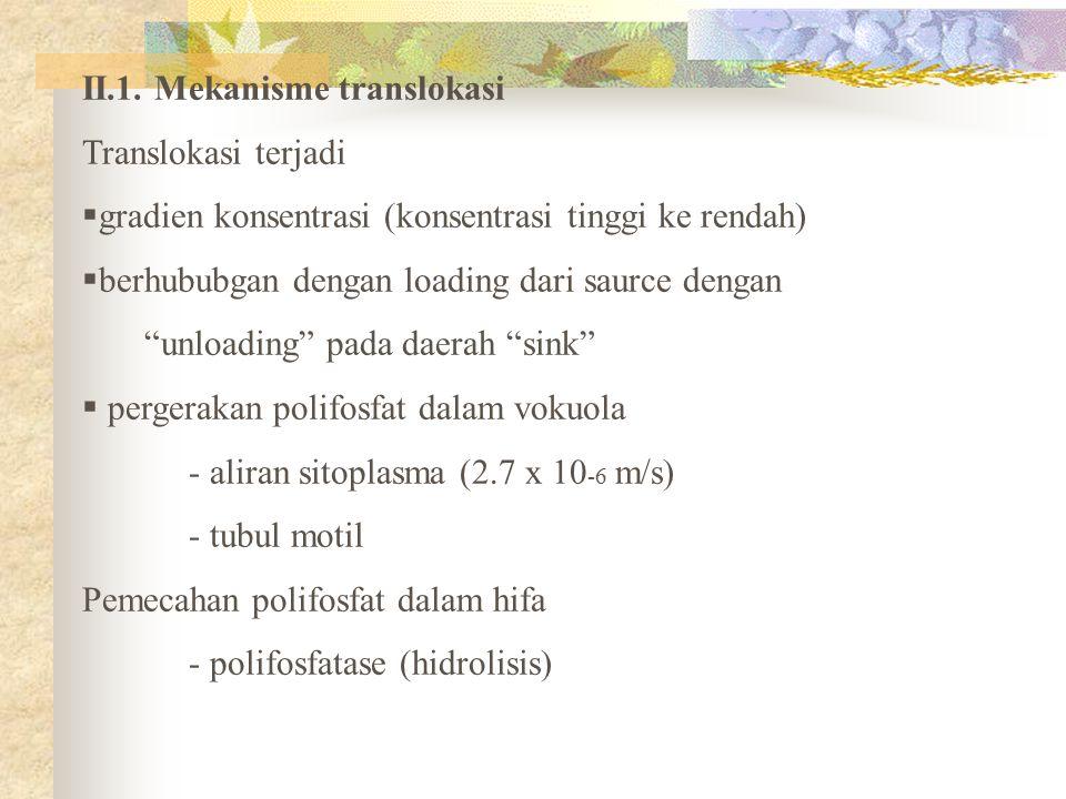"""II.1. Mekanisme translokasi Translokasi terjadi  gradien konsentrasi (konsentrasi tinggi ke rendah)  berhububgan dengan loading dari saurce dengan """""""