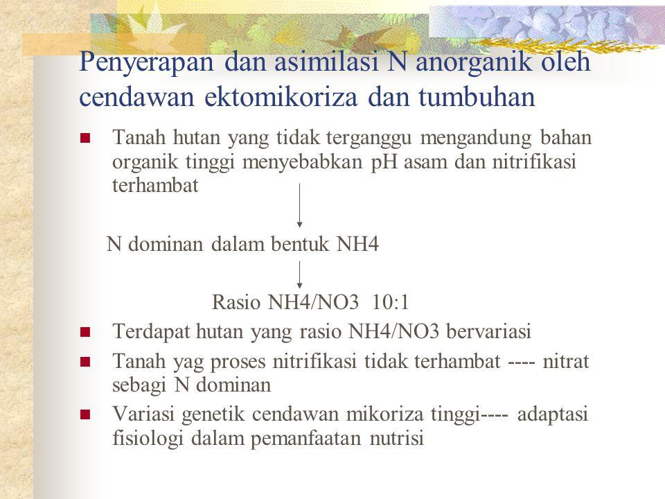 Penyerapan dan asimilasi N anorganik oleh cendawan ektomikoriza dan tumbuhan Tanah hutan yang tidak terganggu mengandung bahan organik tinggi menyebab