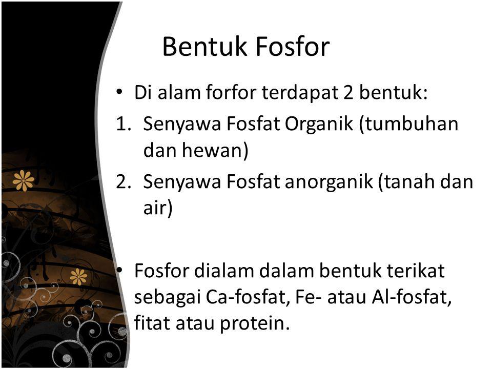 Bentuk Fosfor Di alam forfor terdapat 2 bentuk: 1.Senyawa Fosfat Organik (tumbuhan dan hewan) 2.Senyawa Fosfat anorganik (tanah dan air) Fosfor dialam dalam bentuk terikat sebagai Ca-fosfat, Fe- atau Al-fosfat, fitat atau protein.