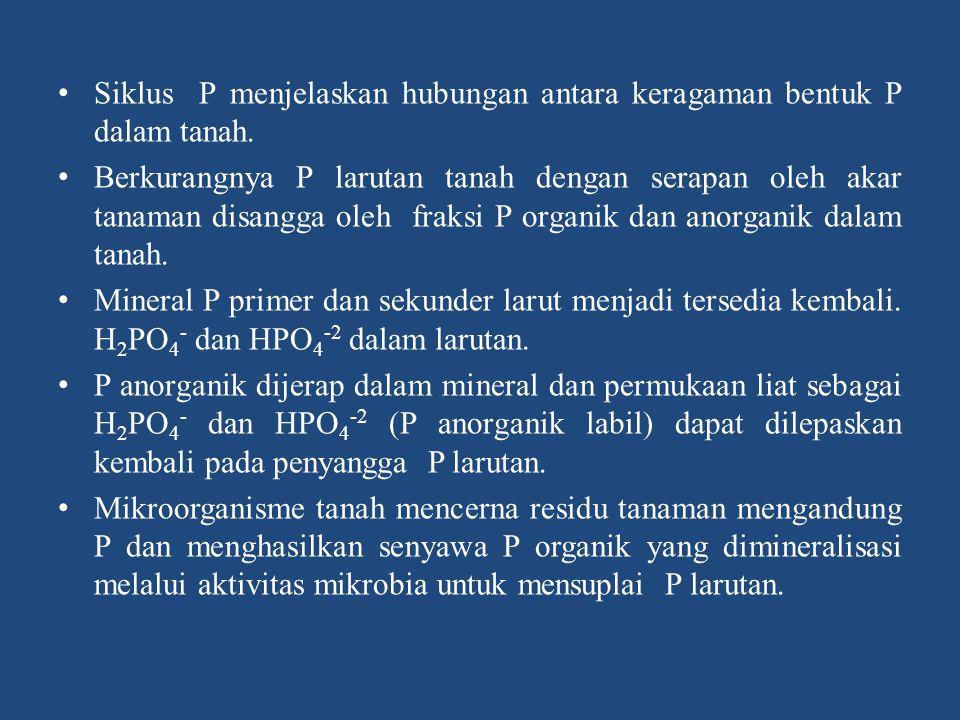 Mineralisasi dan Immobilisasi P di Dalam Tanah Mineralisasi dan Immobilisasi P terjadi secara simultan di dalam tanah dan dapat digambarkan sebagai berikut : Mineralisasi P-organik P-organik (H 2 PO 4 - /HPO 4 -2 ) Immobilisasi P-organik tanah berasal dari sisa-sisa tanaman dan hewan-hewan yang didegradasi oleh mikroba menghasilkan senyawa organik lain dan melepaskan P-organik.