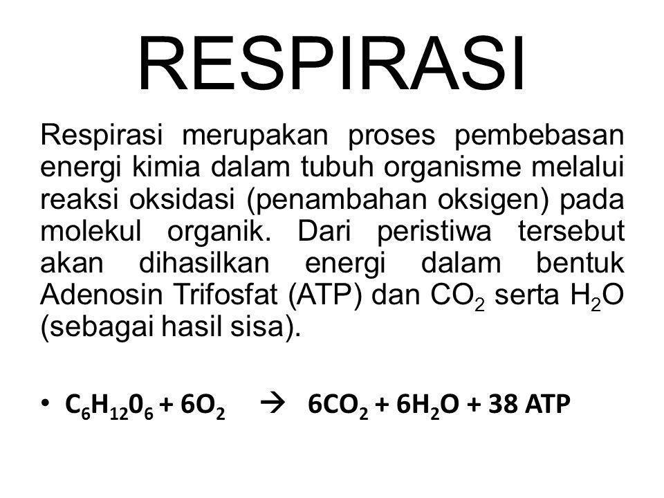 RESPIRASI Respirasi merupakan proses pembebasan energi kimia dalam tubuh organisme melalui reaksi oksidasi (penambahan oksigen) pada molekul organik.