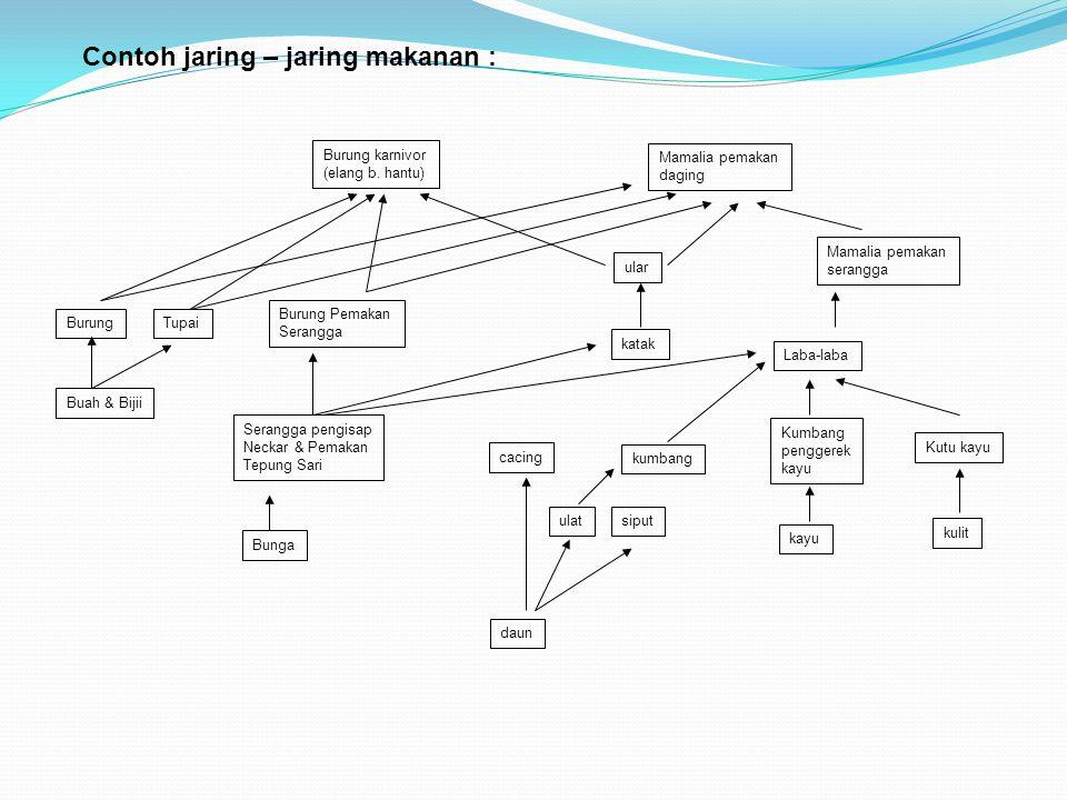 Contoh jaring – jaring makanan : Burung karnivor (elang b. hantu) Mamalia pemakan daging Mamalia pemakan serangga Laba-laba Kutu kayu kulit Kumbang pe
