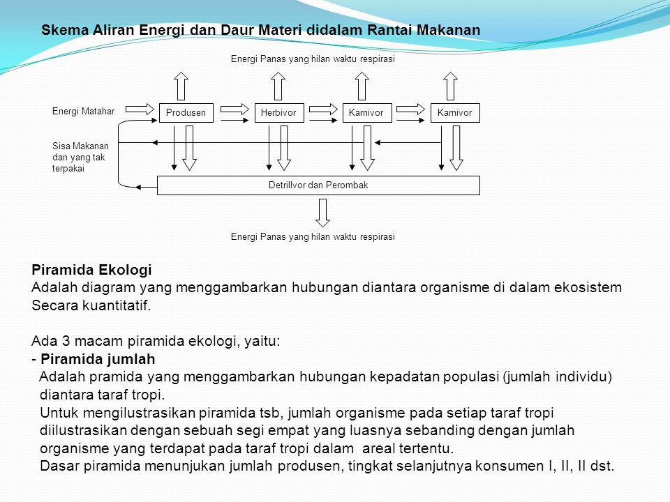 Skema Aliran Energi dan Daur Materi didalam Rantai Makanan ProdusenHerbivorKarnivor Detrillvor dan Perombak Energi Matahar Sisa Makanan dan yang tak t
