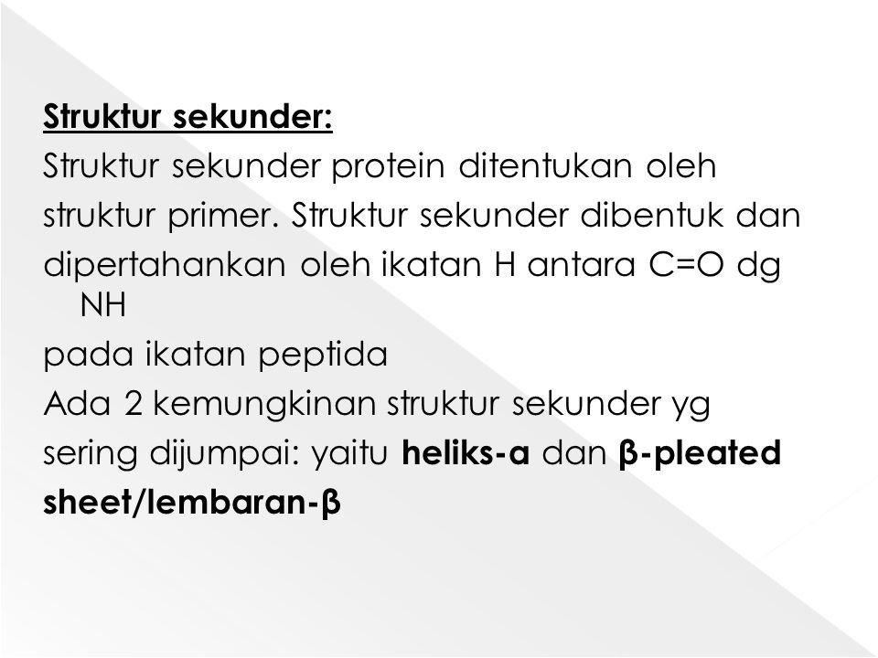 Struktur sekunder: Struktur sekunder protein ditentukan oleh struktur primer. Struktur sekunder dibentuk dan dipertahankan oleh ikatan H antara C=O dg