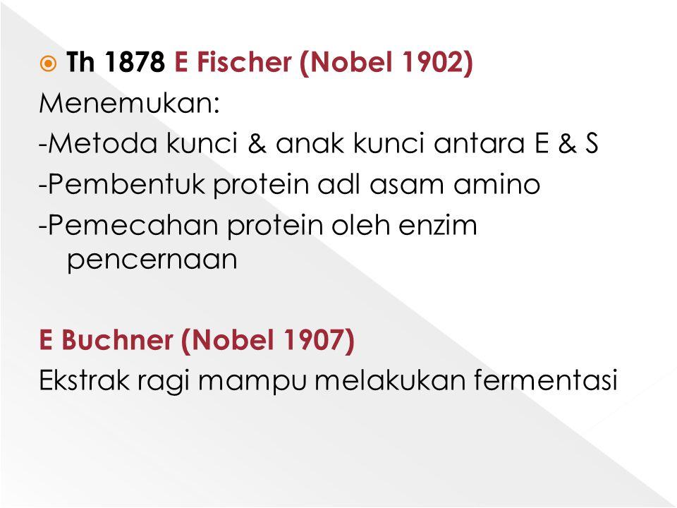  Th 1878 E Fischer (Nobel 1902) Menemukan: -Metoda kunci & anak kunci antara E & S -Pembentuk protein adl asam amino -Pemecahan protein oleh enzim pe