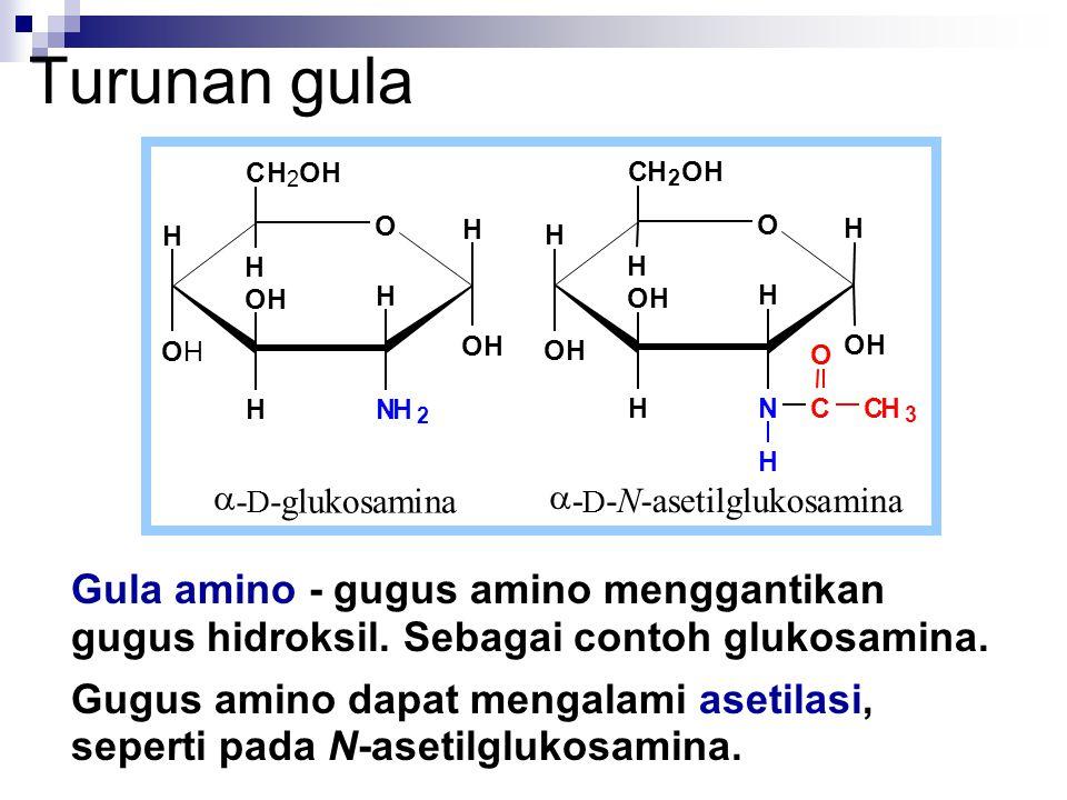 Gula amino - gugus amino menggantikan gugus hidroksil. Sebagai contoh glukosamina. Gugus amino dapat mengalami asetilasi, seperti pada N-asetilglukosa