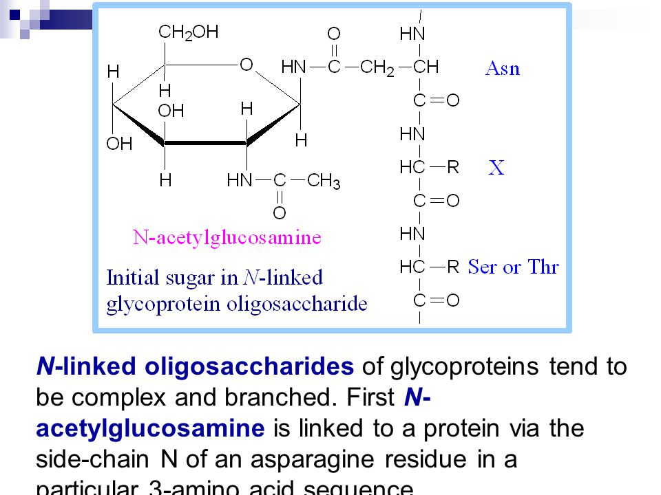 N-linked oligosaccharides of glycoproteins tend to be complex and branched.