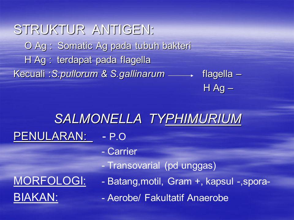 Kecuali Salmonella typhosa hanya ganas pd manusia Sifat dari S.schotmuelleri = S.typhimurium dlm memfermentasi K.H & pembentukan H 2 S dapat dimasukkan dalam 1 spesies Perbedaan : S.schotmuelleri manusia HOST S.typhimurium hewan S.typhimurium hewan