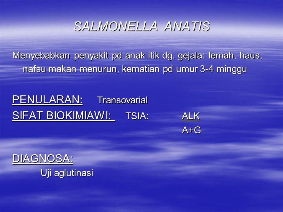 SALMONELLA GALLINARUM MORFOLOGI: idem tidak berflagella BIAKAN & RESISTENSI: idem SIFAT BIOKIMIA: TSIA:ALKH 2 S ± A KEGANASAN: Fowl typhoid KEKEBALAN:+ DIAGNOSA: idem Memberikan reaksi aglutinasi silang dg S.pullorum atau S.typhosa