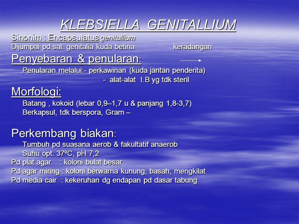 KLEBSIELLA Morfologi & sifat: Batang pendek, berkapsul, non motil Tumbuh pd suasana aerob Memfermentasi KH Asam + Gas Spesies Klebsiella yg penting: Klebsiella genitallium sal.