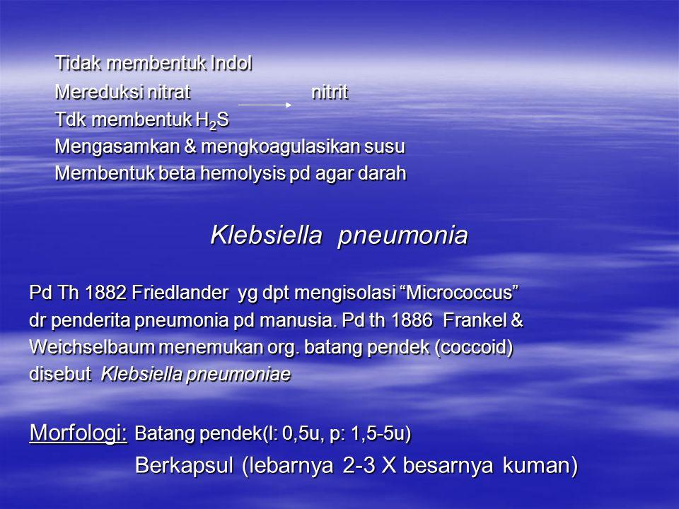 Cavia/ kelinci yg diinfeksi dg toksin gejala spt pd menjangan penderita Morfologi: Batang ( p: 0,8 – 3 u ), non motil, berkapsul, Gram – Tumbuh pd suasana aerob membentuk koloni besar, convex, mengkilat, mucoid Reaksi Biokimia: Memfermentasi dextrose, laktose, galaktose, sukrose, rhamnose, glycerol, mannose, raffinose dulcitol, salicin, inositol & mannitol Asam + Gas Mengurai inulinAsam