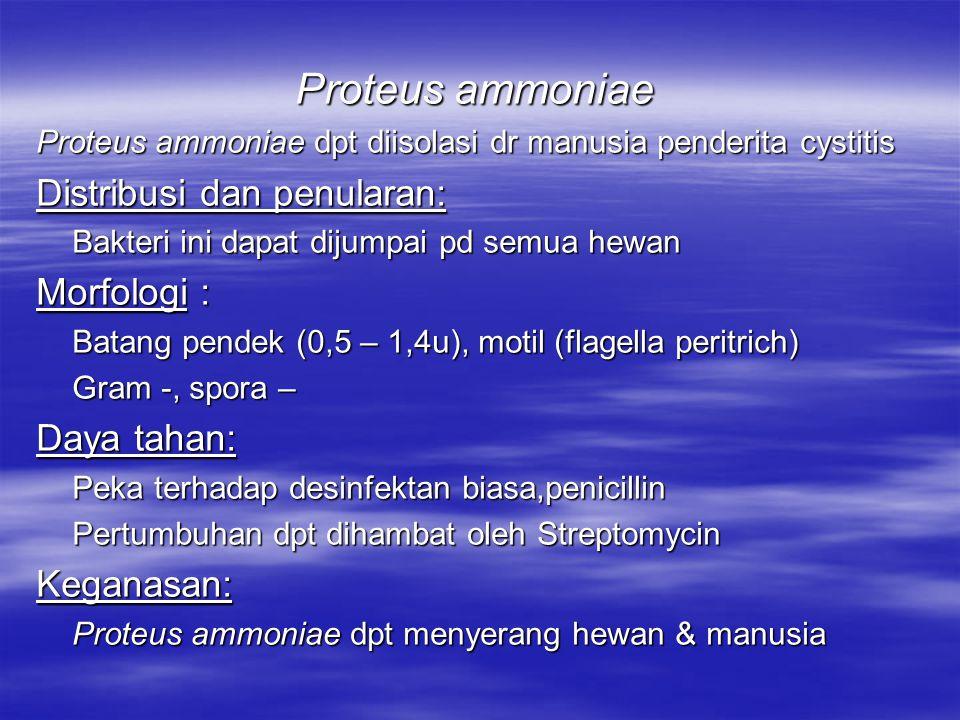 Proteus hydrophylus Pendahuluan: Menyebabkan penyakit pd katakRed leg septicaemia dan perdarahan pd kulit Morphologi: Batang pendek (0,6 – 1,3 u), motil, Gram – Pd.