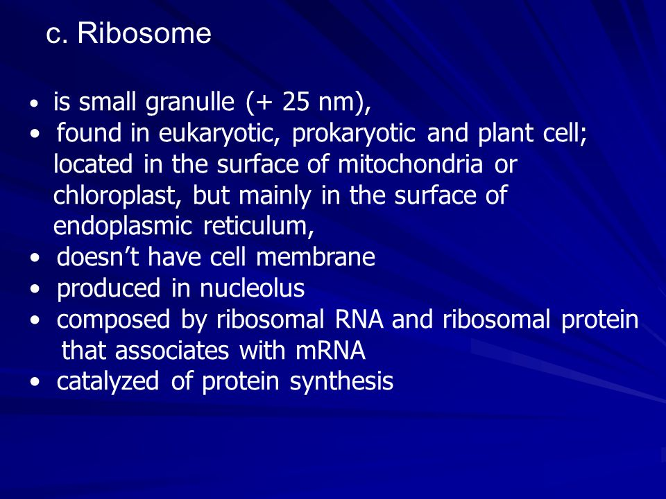 is small granulle (+ 25 nm), found in eukaryotic, prokaryotic and plant cell; located in the surface of mitochondria or chloroplast, but mainly in the surface of endoplasmic reticulum, doesn't have cell membrane produced in nucleolus composed by ribosomal RNA and ribosomal protein that associates with mRNA catalyzed of protein synthesis c.