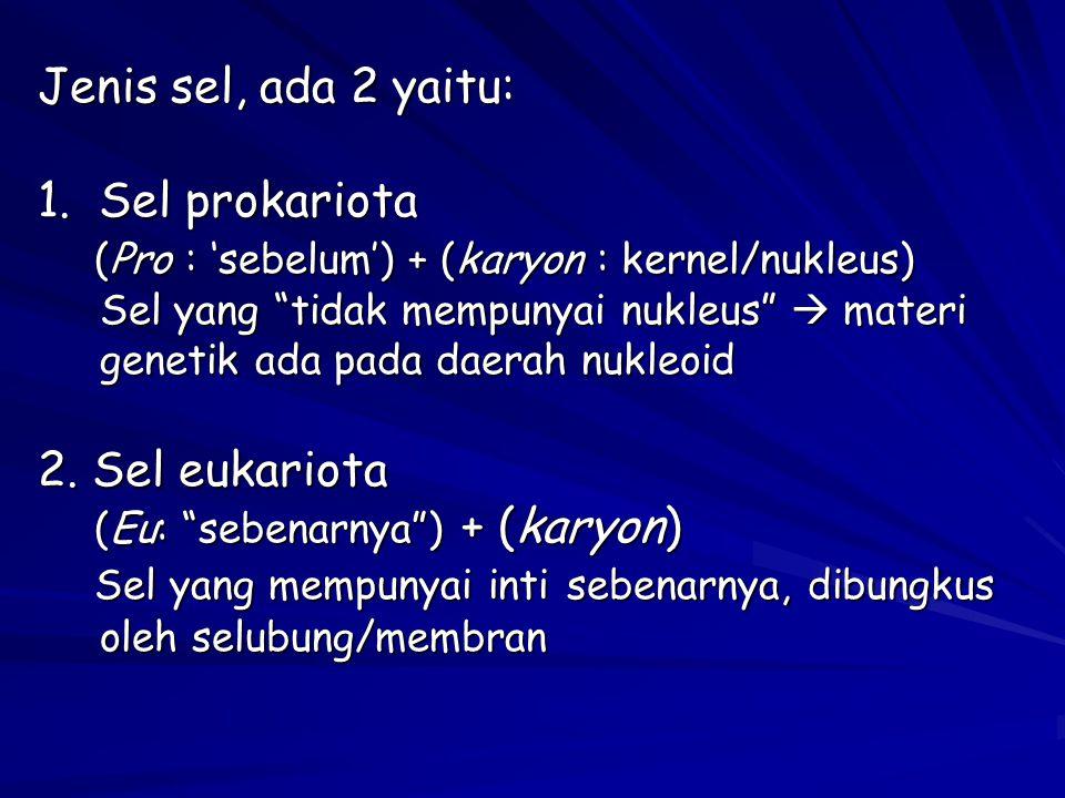 """Jenis sel, ada 2 yaitu: 1. Sel prokariota (Pro : 'sebelum') + (karyon : kernel/nukleus) Sel yang """"tidak mempunyai nukleus""""  materi genetik ada pada d"""