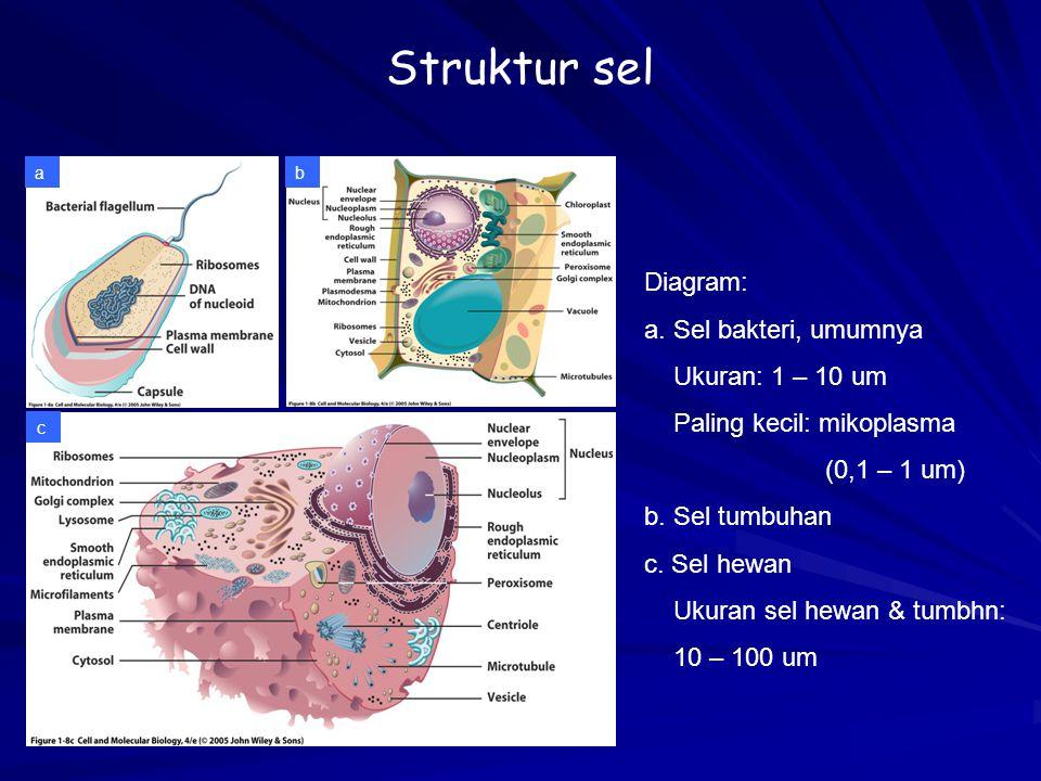 Struktur sel ab c Diagram: a. Sel bakteri, umumnya Ukuran: 1 – 10 um Paling kecil: mikoplasma (0,1 – 1 um) b. Sel tumbuhan c. Sel hewan Ukuran sel hew