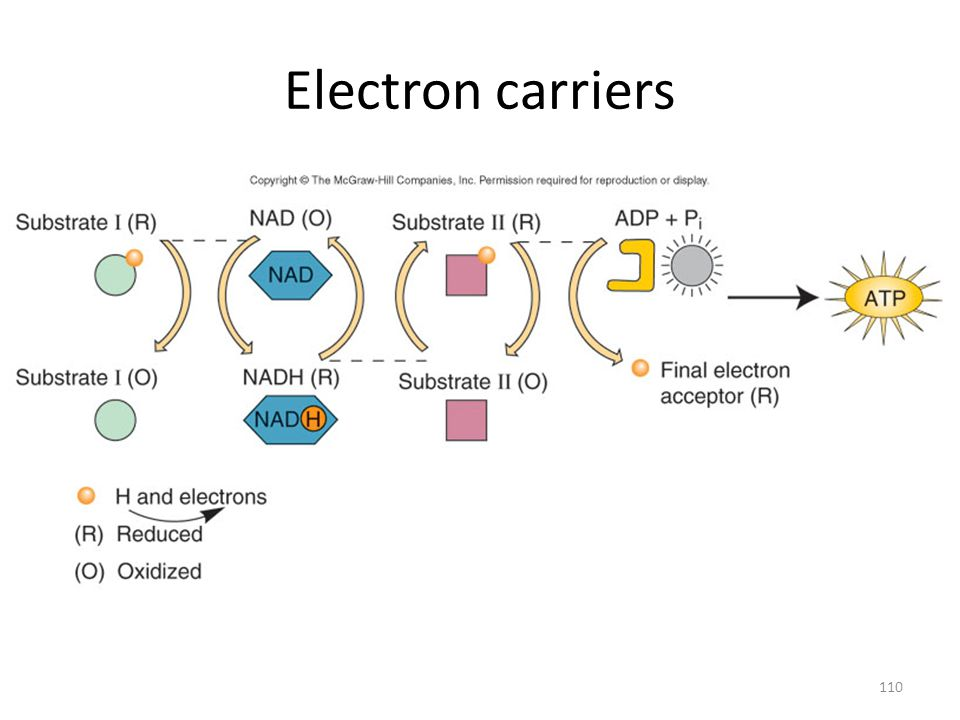110 Electron carriers