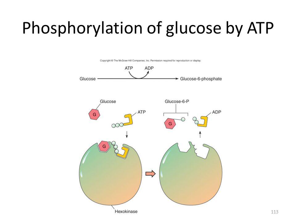 113 Phosphorylation of glucose by ATP