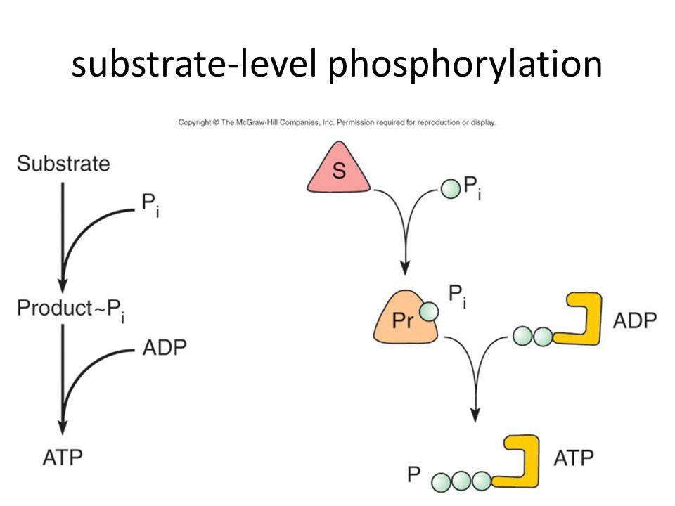 115 substrate-level phosphorylation
