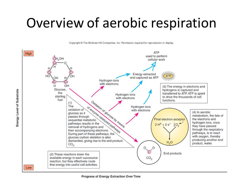 118 Overview of aerobic respiration