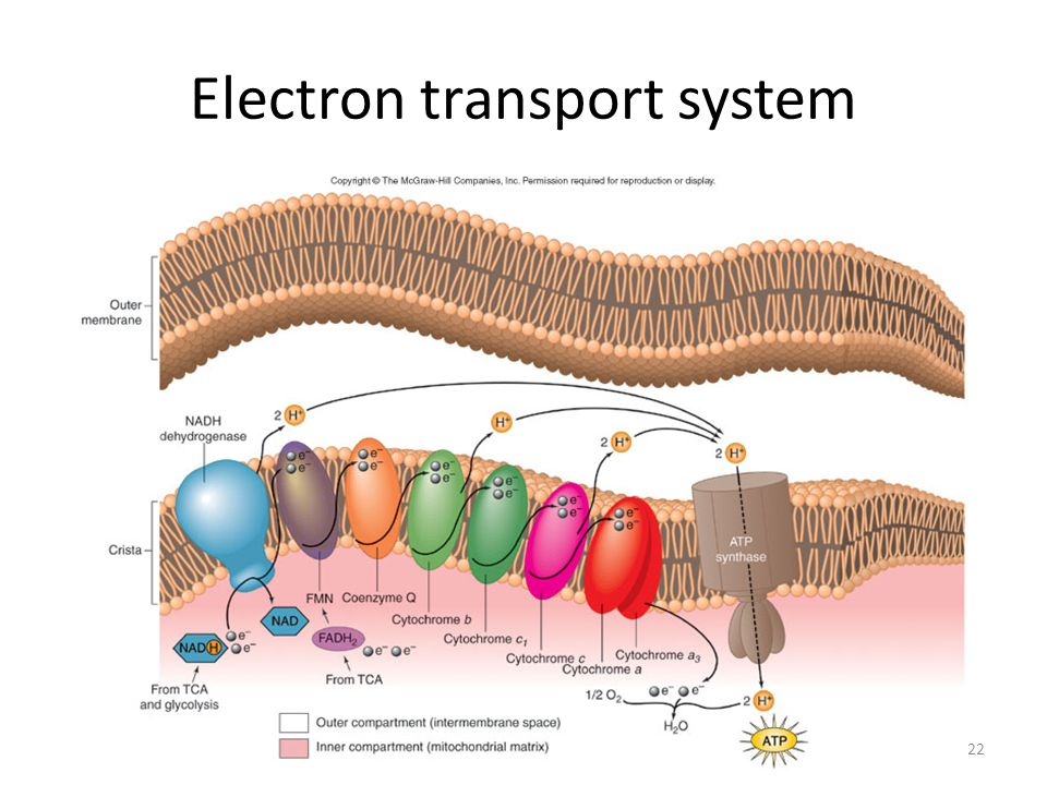 122 Electron transport system