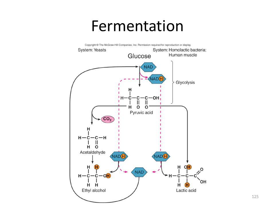125 Fermentation