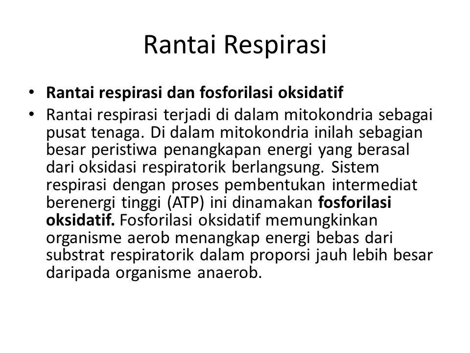 Rantai Respirasi Rantai respirasi dan fosforilasi oksidatif Rantai respirasi terjadi di dalam mitokondria sebagai pusat tenaga. Di dalam mitokondria i