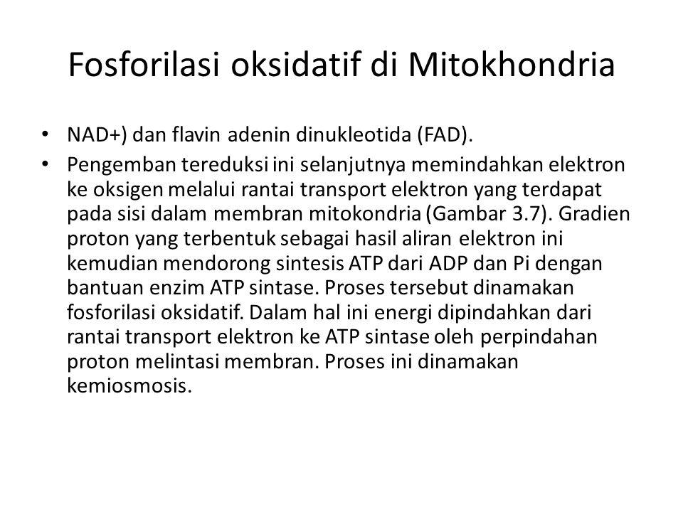 Fosforilasi oksidatif di Mitokhondria NAD+) dan flavin adenin dinukleotida (FAD). Pengemban tereduksi ini selanjutnya memindahkan elektron ke oksigen