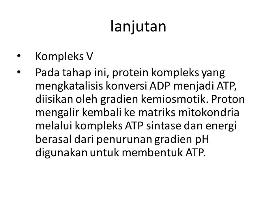 Kompleks V Pada tahap ini, protein kompleks yang mengkatalisis konversi ADP menjadi ATP, diisikan oleh gradien kemiosmotik. Proton mengalir kembali ke