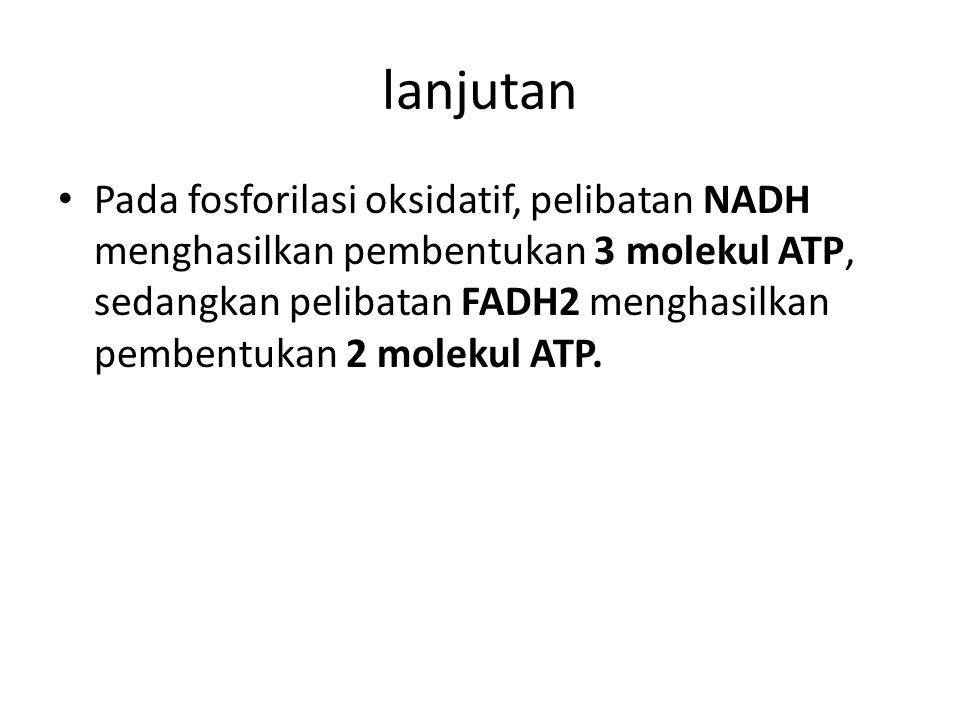 Pada fosforilasi oksidatif, pelibatan NADH menghasilkan pembentukan 3 molekul ATP, sedangkan pelibatan FADH2 menghasilkan pembentukan 2 molekul ATP.