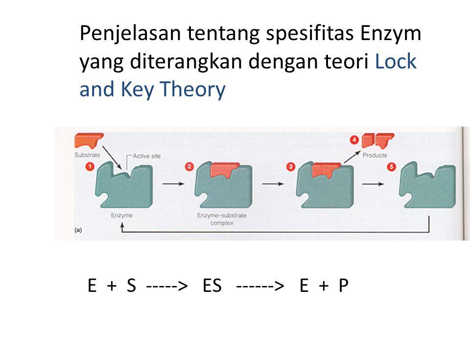 Penjelasan tentang spesifitas Enzym yang diterangkan dengan teori Lock and Key Theory E + S -----> ES ------> E + P